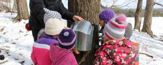 Sugaring Field Trip at the Farm