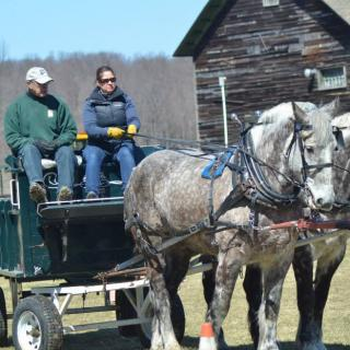 driving horse clinic 2017?itok=_puQ3nrL green mountain draft horse beginner driving clinic shelburne farms