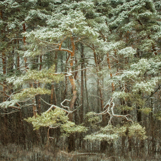 Forest. Photo by Anne-Marie Littenberg.