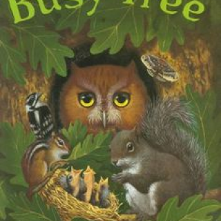 The Busy Tree book cover
