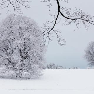 Snowy Tree and Landscape