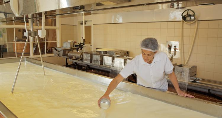 rennet production in cheese Animal rennet has been used for coagulating cheese milk ever since our founder,   we also offer halal naturen® produced with specially-certified raw.