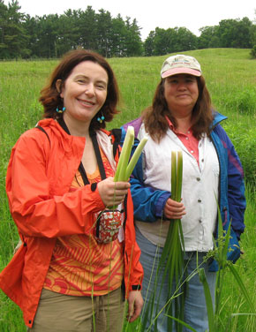 Harvesting young cattail root in our spring Wild Edibles program